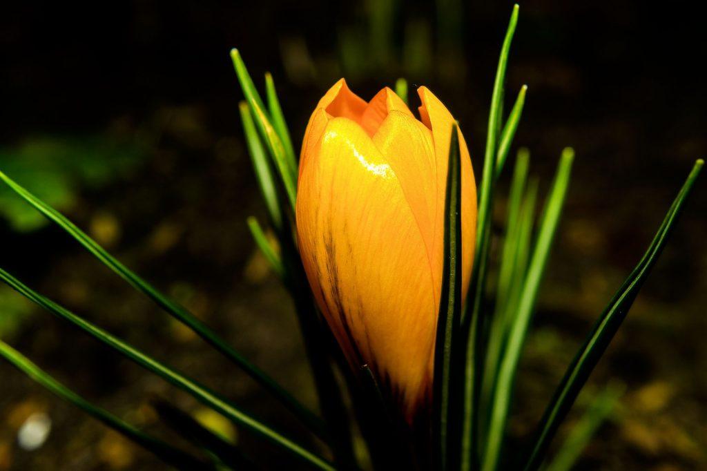 oranje bloemen namen