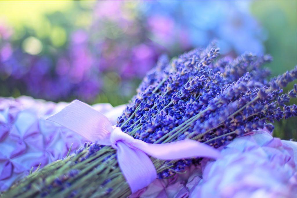 Lavendel snoeien voorjaar