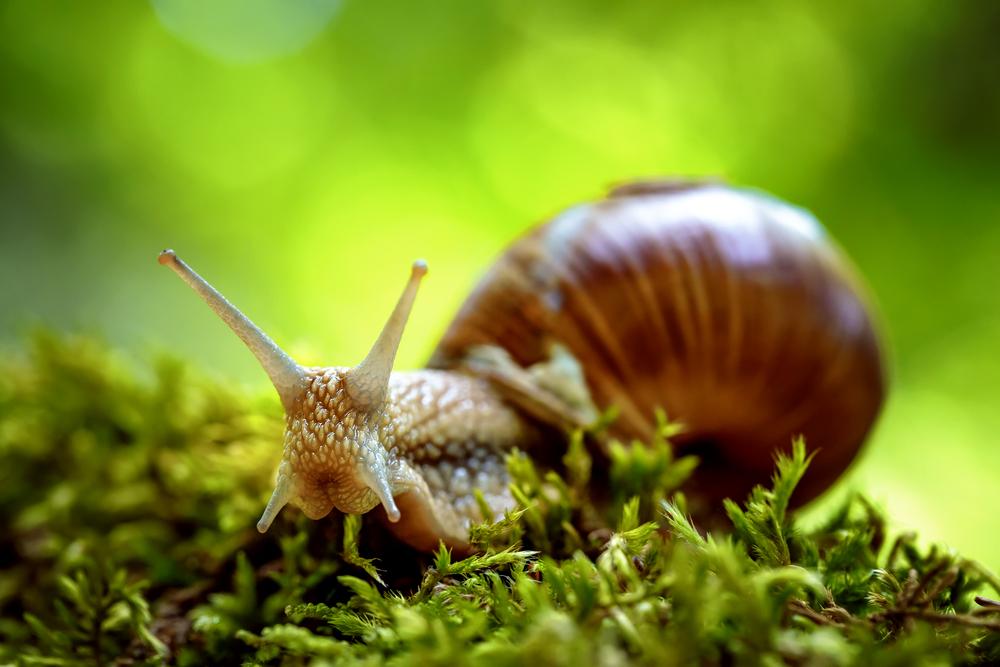 tegen slakken