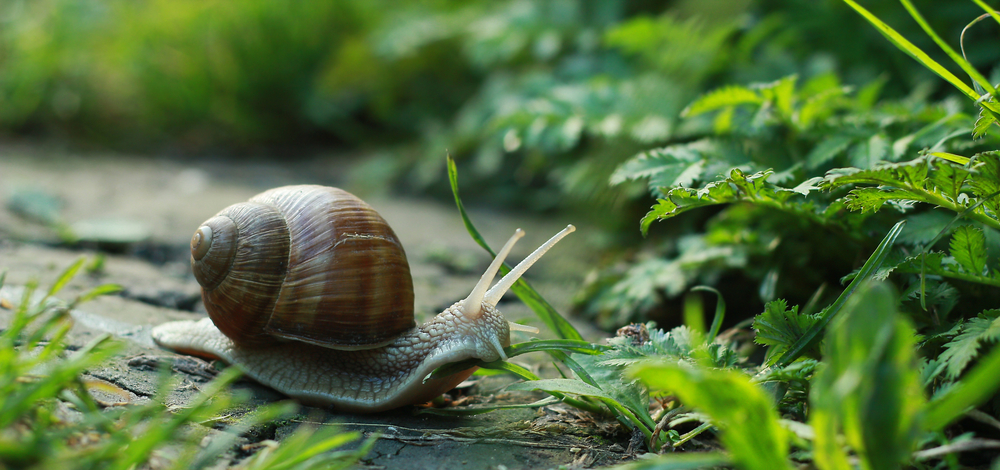 Wat te doen tegen slakken in de tuin