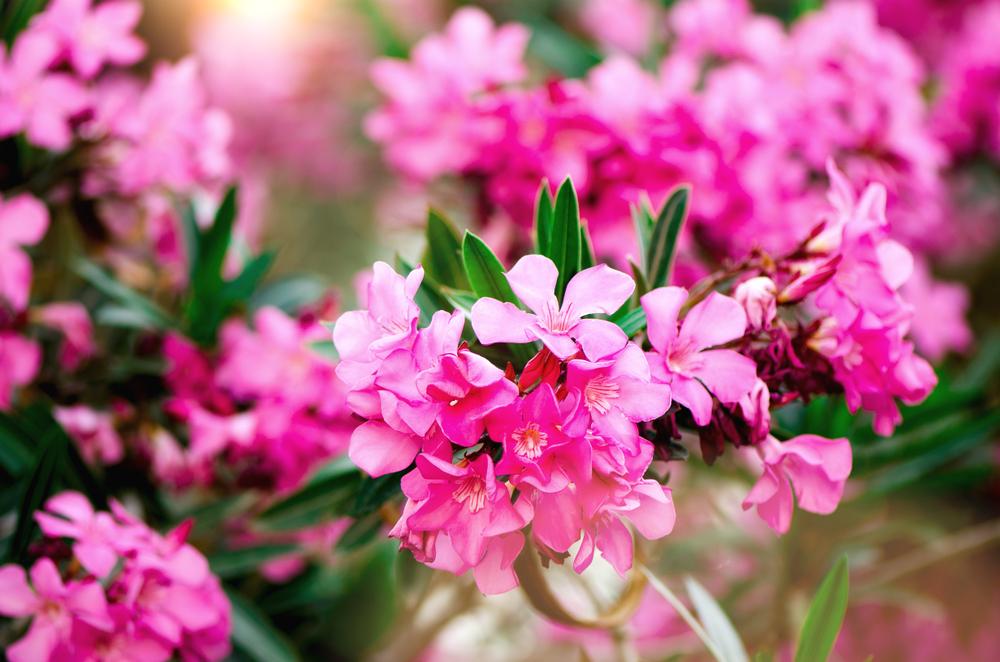 Deze planten zijn giftig