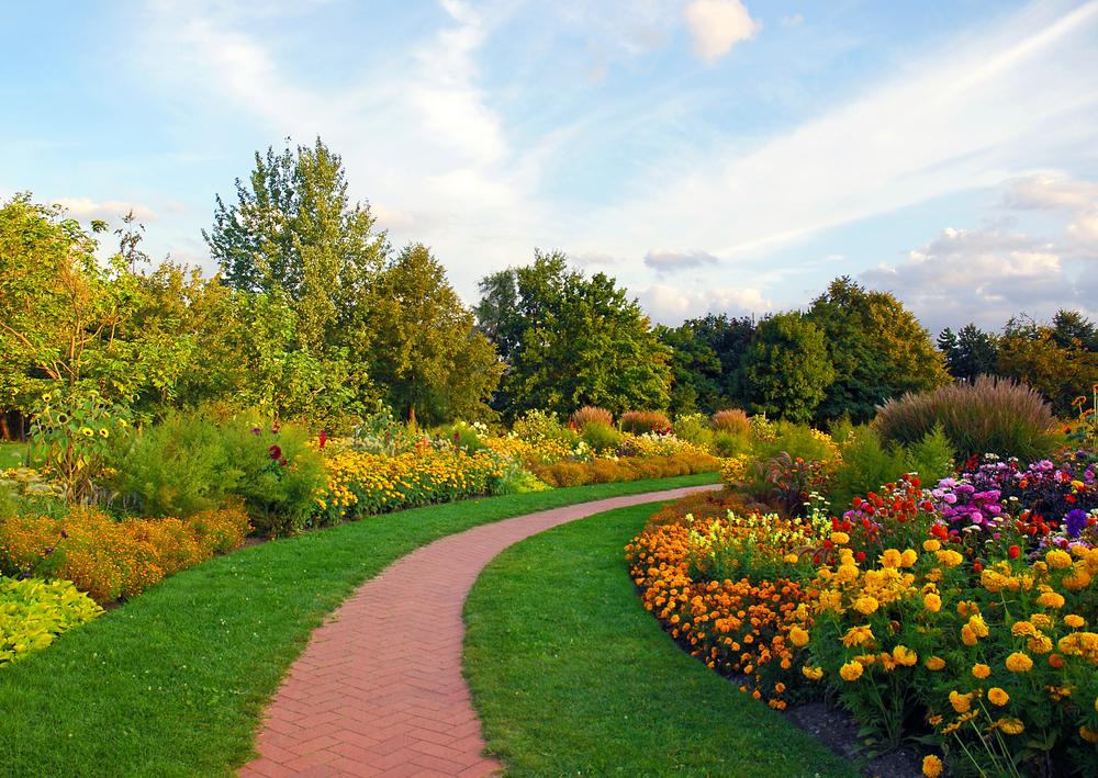 Geel bloeiende planten | 10 x mooie gele bloemen | Tijd voor je tuin